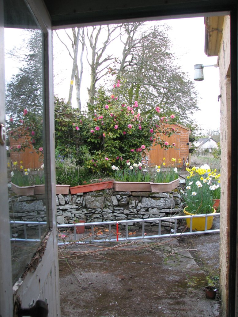 The view from the back door (before we had the back door replaced...and when I thought the glass was liable to break or fall out each time I shut it forcefully!)
