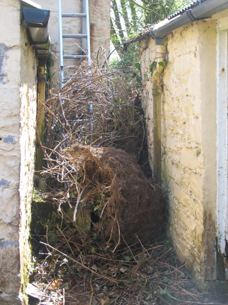 ...then in the alley between the stone sheds and the back of the house...