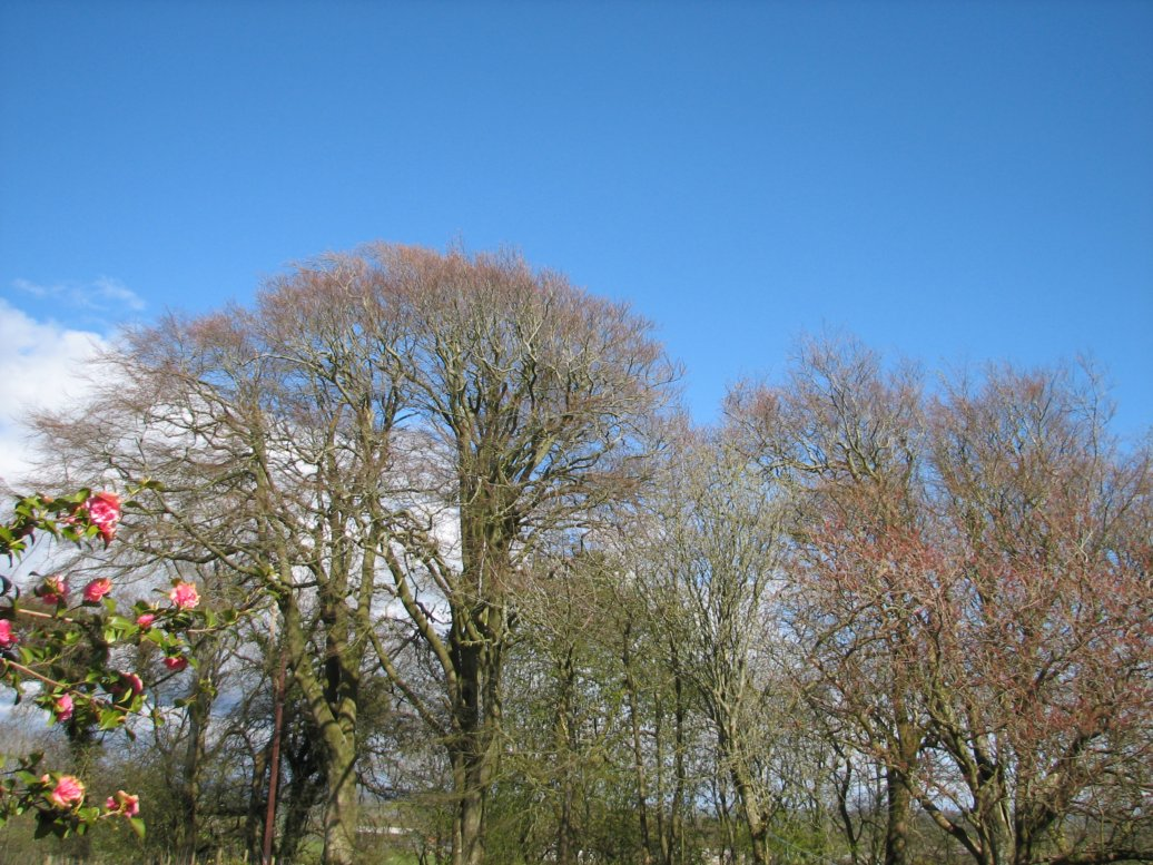 From the house, looking NEish - this was before the blossoms came out on the big cherry tree on the right