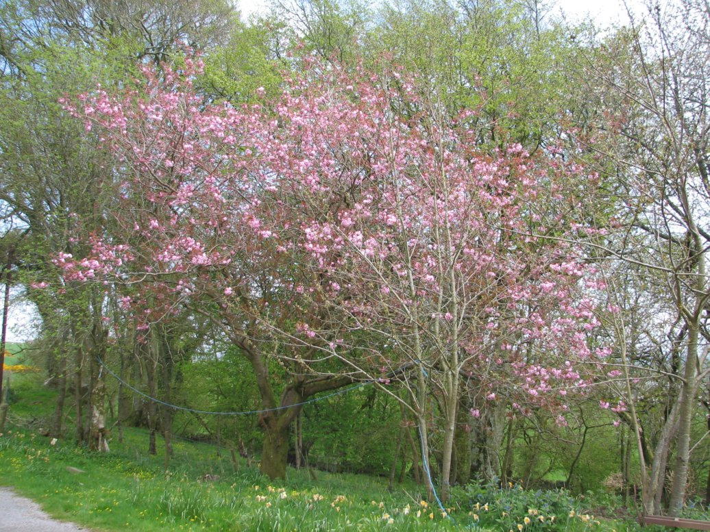 May started with the glorious cherry blossom