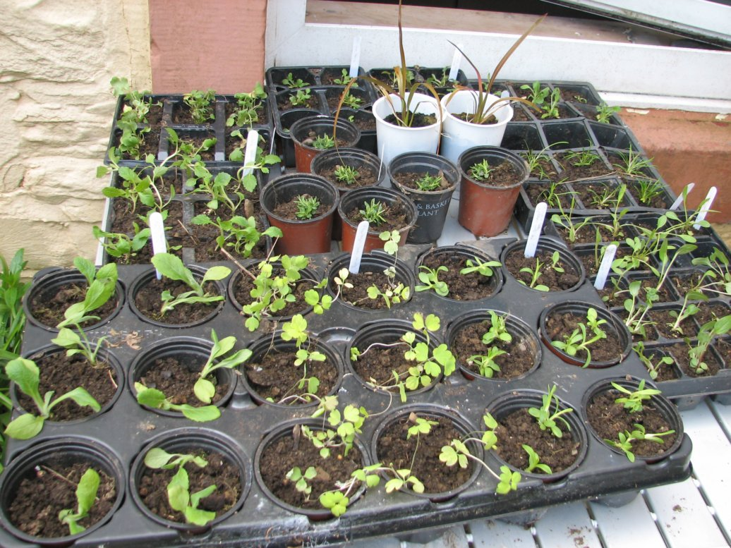 I'd purchased a whole array of perennial flower plugs which were all merrily growing on in pots