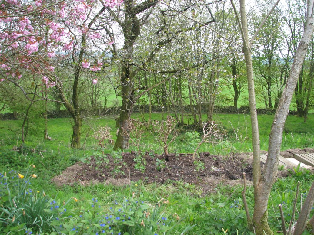 While the tree nursery was dug and planted up with a host of elder saplings from Oxfordshire and, along the back, some fuschia plants we rescued from a pile that had been dumped up in the north-east corner of the land