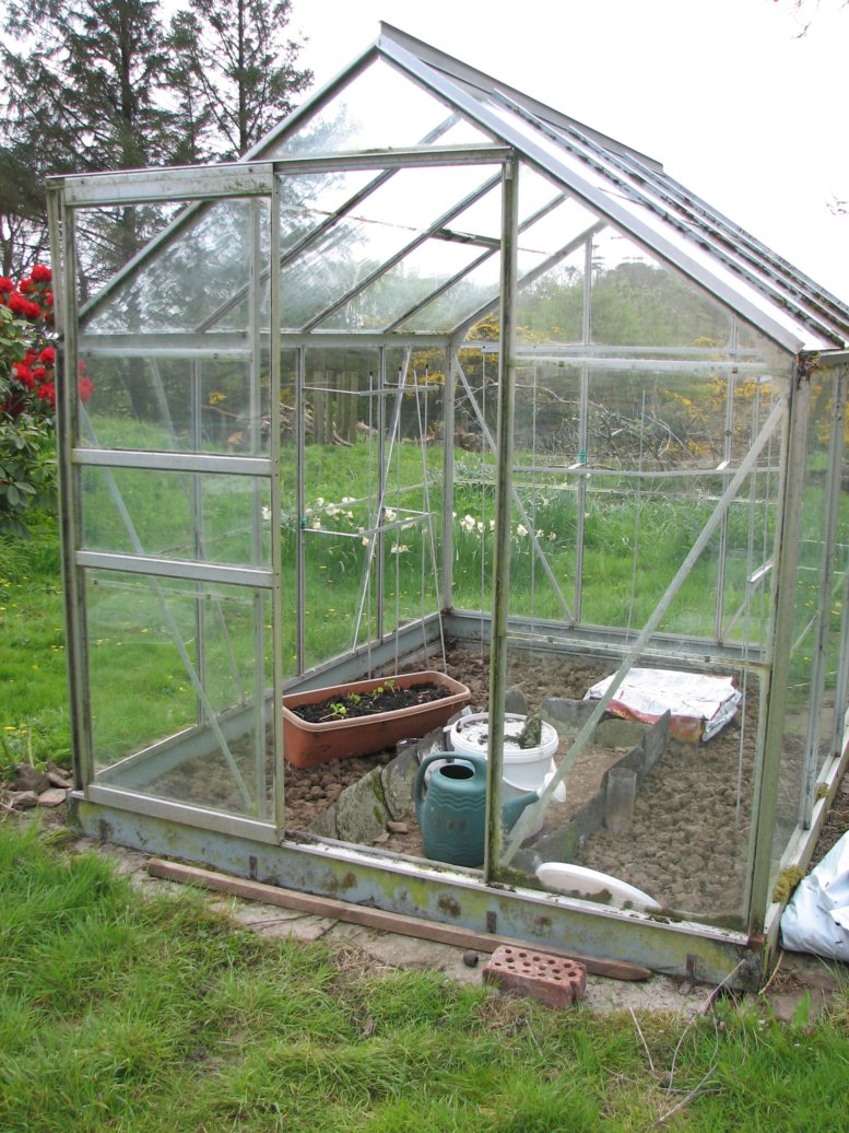The greenhouse, now with the glass cleaned, had its first seedlings planted out but, sadly, most succumbed to the slugs