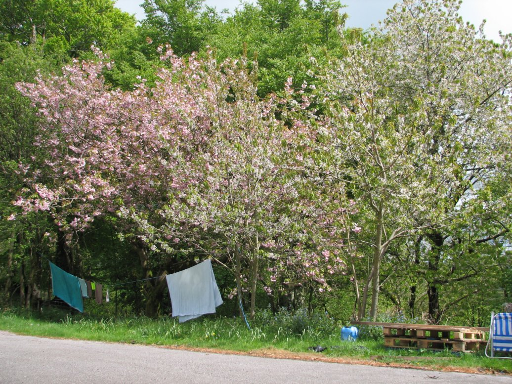 And finally on this little 180 degree view, the cherry tree again (with our very well used washing line underneath)