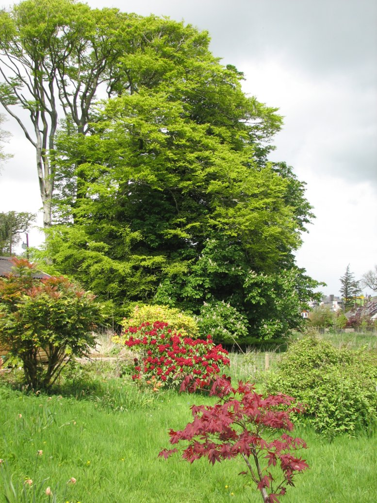Coming round to the right, this is our lovely big horse chestnut / beech patch...