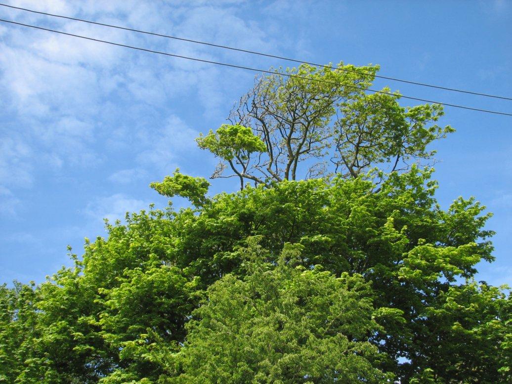 Trees! Sky! Sunshine!