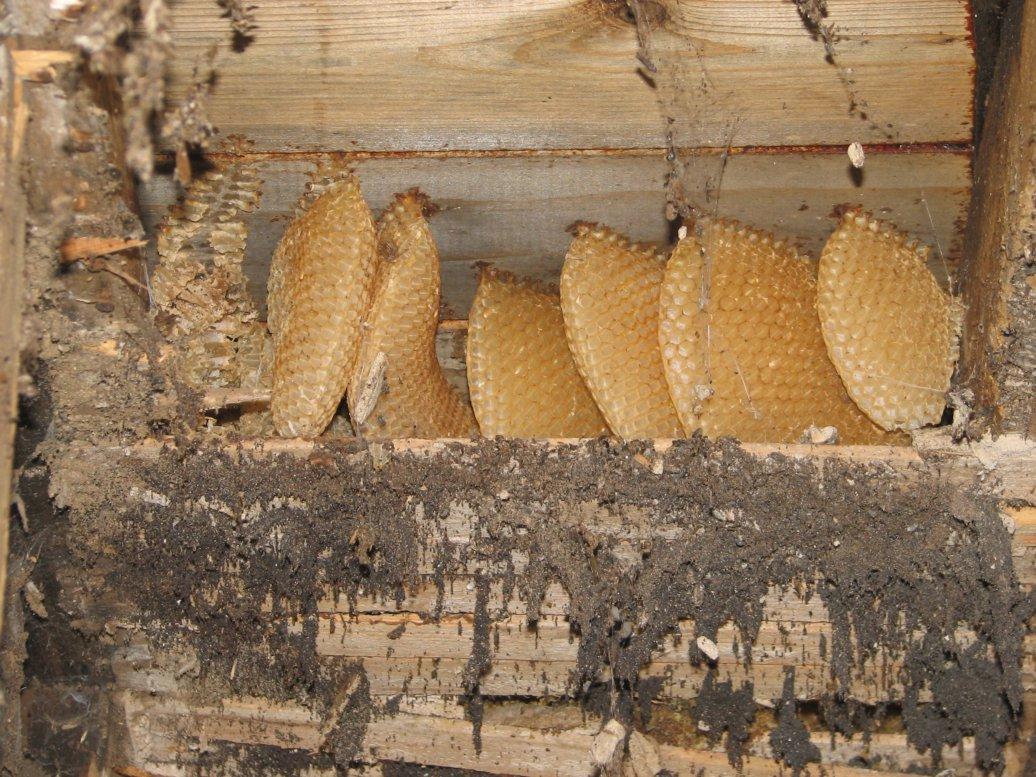 ...lots of honeycomb!