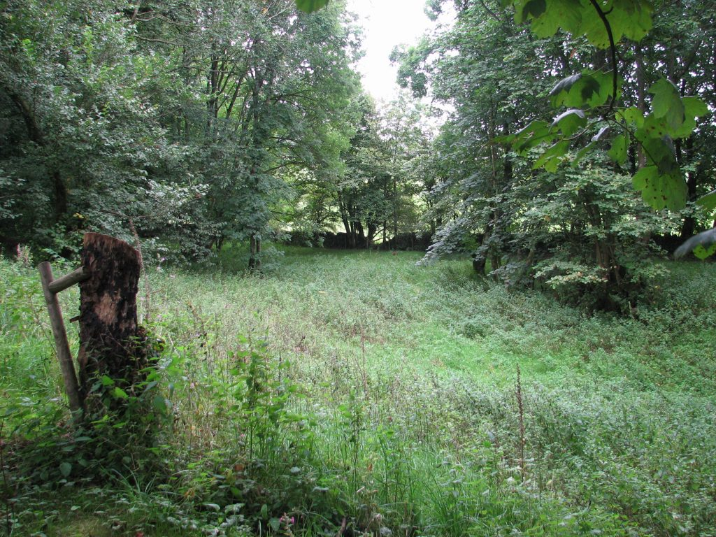 And, from a similar spot, looking into the other bit of land just down from the house which, for want of any other descriptor, is where we imagine tents might quite happily nestle at some point
