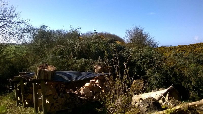 The felled tree seen from the pathway that comes down from the house