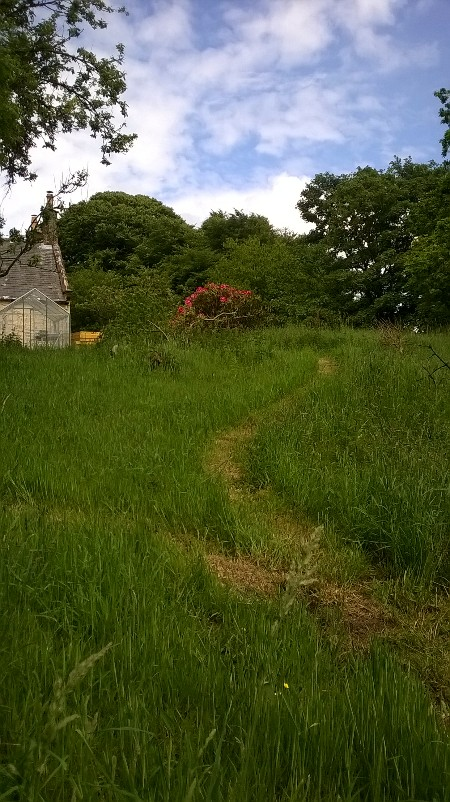 Sometimes mowing is just a case of maintaining pathways