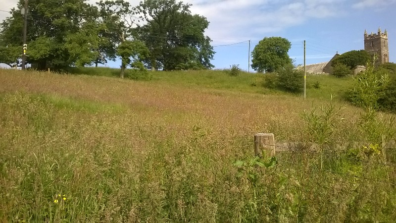 """Which led me to embracing """"meadow"""" - """"Oh yes, we're just leaving this bit to be a meadow."""" Sounds much more impressive than, """"Sorry, haven't a clue what we're doing with this bit!"""""""
