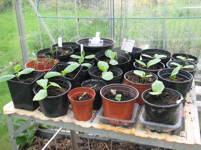 Growing-greenhouse2
