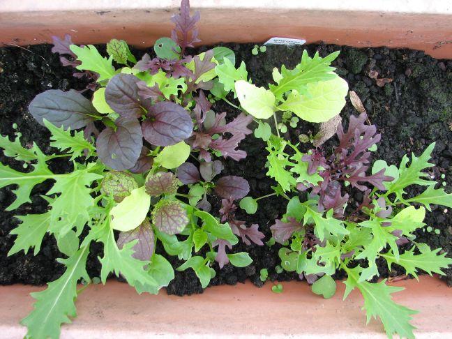 Growing-greenhouse4