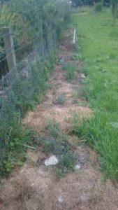 """This year I got really into putting grass cuttings straight on to beds as an instant mulch. And it worked pretty well. This is the """"boundary border"""" (with our neighbours with the polytunnel) in the fruit garden"""
