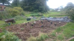 This year's brassica bed