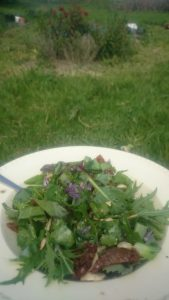 Yum! Salad almost exclusively from the garden (notwithstanding the sun dried tomatoes and seeds)